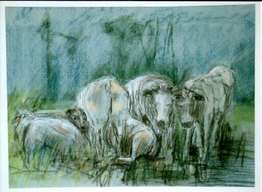 Koeien in België  (verkocht)